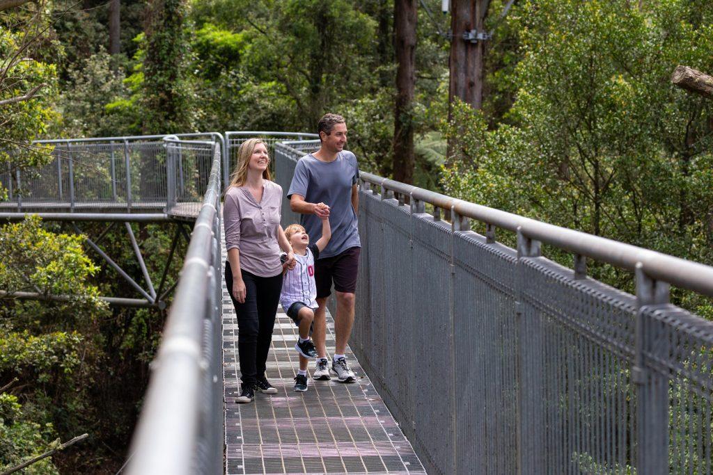 Illawarra Fly Treetop Adventures